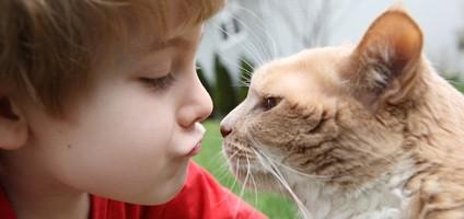 غذا دادن به بچه گربه