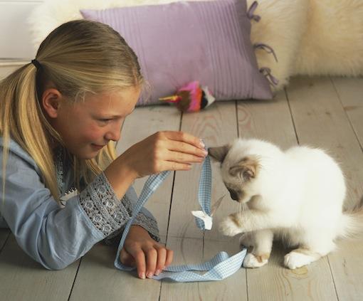 فروش بچه گربه پرشین