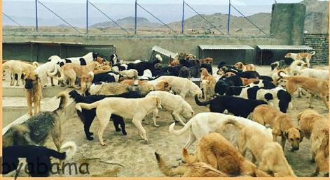 پناهگاه حیوانات اراک
