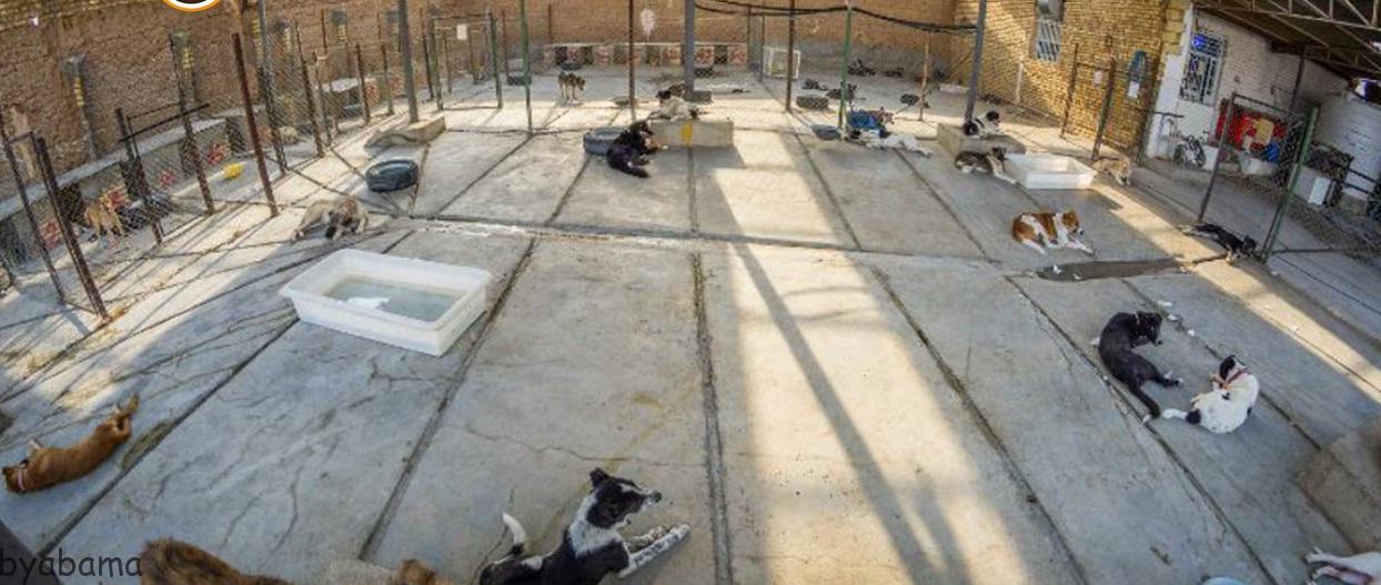 پناهگاه حیوانات امید اصفهان