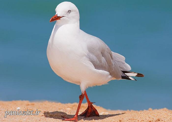 ده پرنده خطرناک