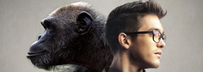 human_chimp_brains_wide